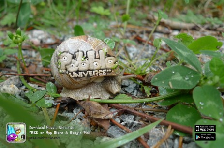 Guerilla Snail